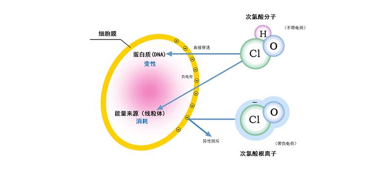 次氯酸发生器的基本操作流程