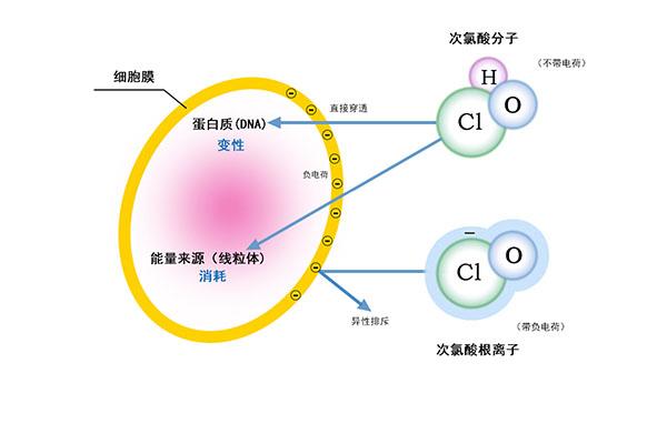 次氯酸发生器_0001_次氯酸